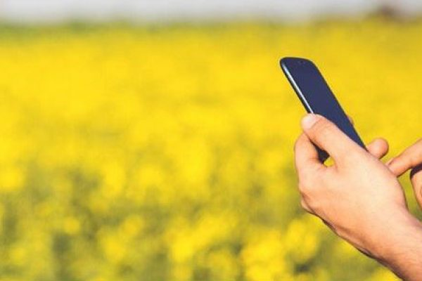 Field and Smartphone