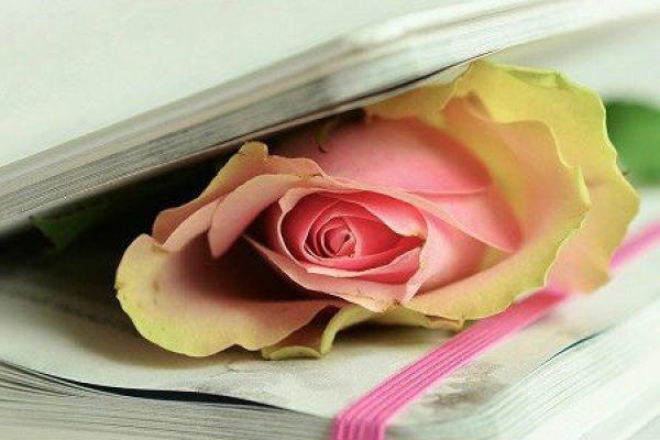 Rose in a diary