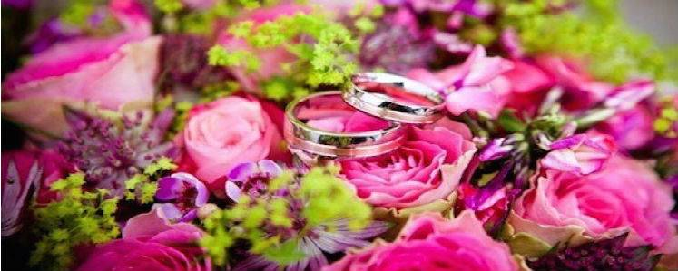 wedding rings on a roses