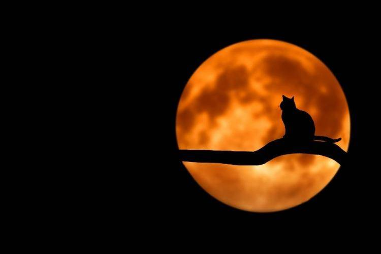 Cat silhouette in front of moon