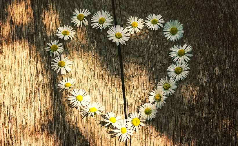 heart made by flowers