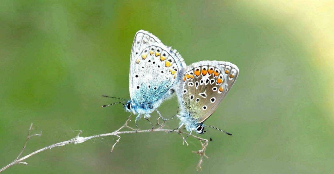 Butterfly pairs