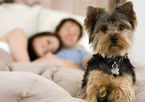 Dogs & Breakups go hand in hand. Dogs too get depressed and are very sensitive. Your breakup affects a pet