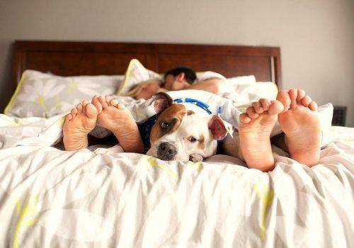 couple foot with dog