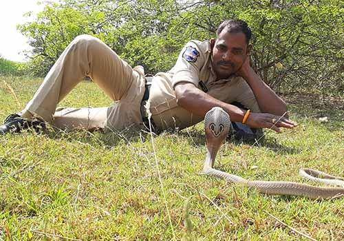 Fact on world snake day is that Snakes are not dangerous till they're not disturbed