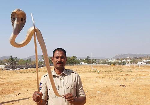 Rescuing snakes on world snake day
