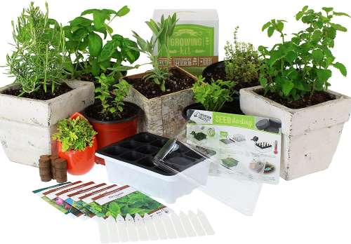 Mountain Valley Seed Company Culinary Indoor Herb Garden Starter Kit