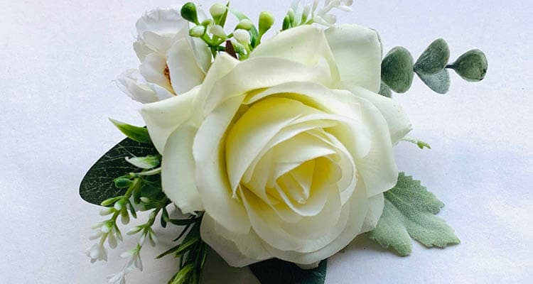 Cream rose meaning in a relationship