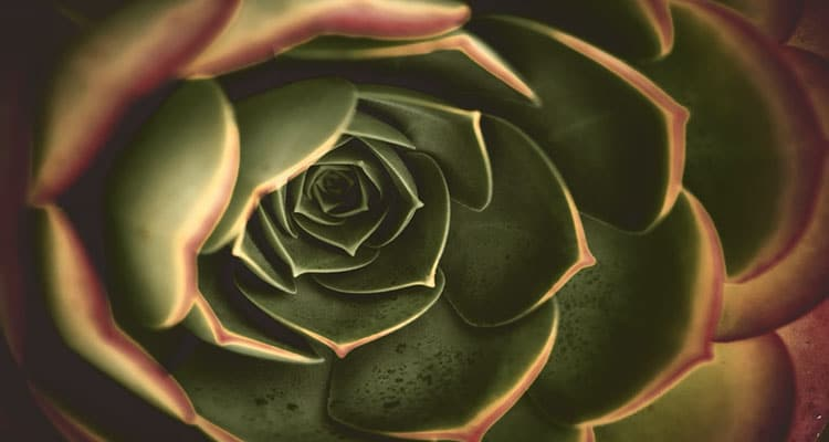 Green rose meaning in a relationship