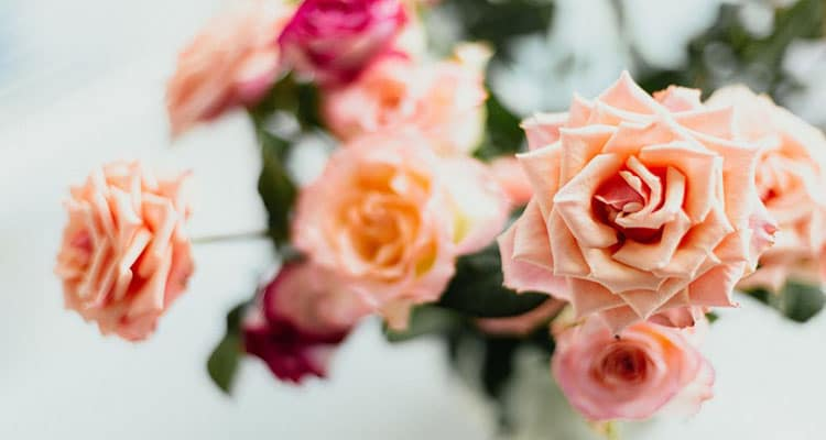 rose meaning in a relationship